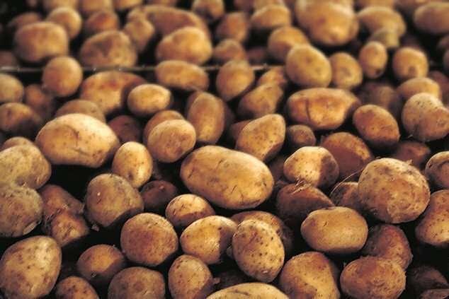 patate di rotzo